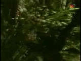 ★★★Таинственный остров 19 серия ★★★